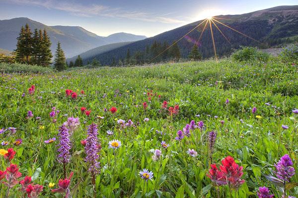Добиться качественного газона из семян