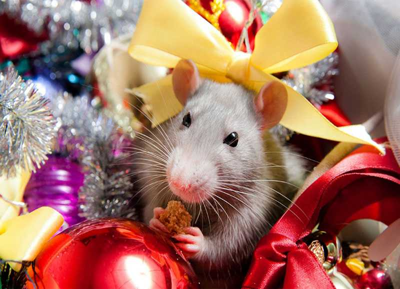 отверстия фото картинки с наступающим новым годом с мышкой продается