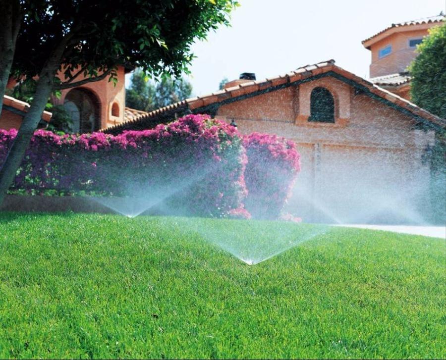 Рекомендации по устройству газона в условиях экстремально жаркой погоды